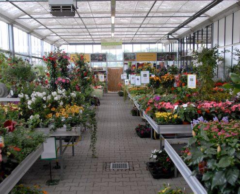 Kalthalle mit großer Blumenauswahl,
