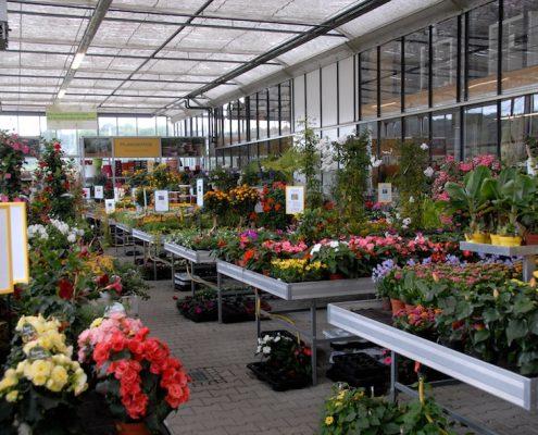 Kalthalle mit großer Blumenauswahl