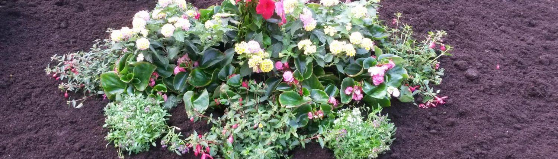 Gepflanztes Bukett als Referenz für die Grabpflege