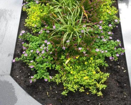 Grab mit Sommerbepflanzung